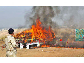A security official stands near the dump of narcotics put to the torch by the ANF in Rawalpindi. PHOTO: APP/FILE
